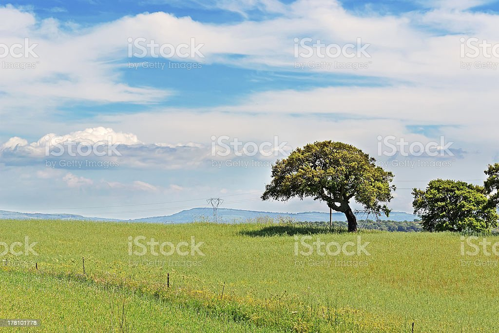 oak and green grass royalty-free stock photo