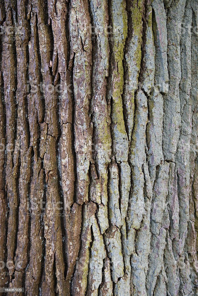 Oak Bark royalty-free stock photo