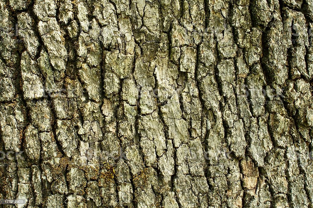 oak bark textured background stock photo