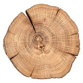 Oak cracked split with growth rings isolated