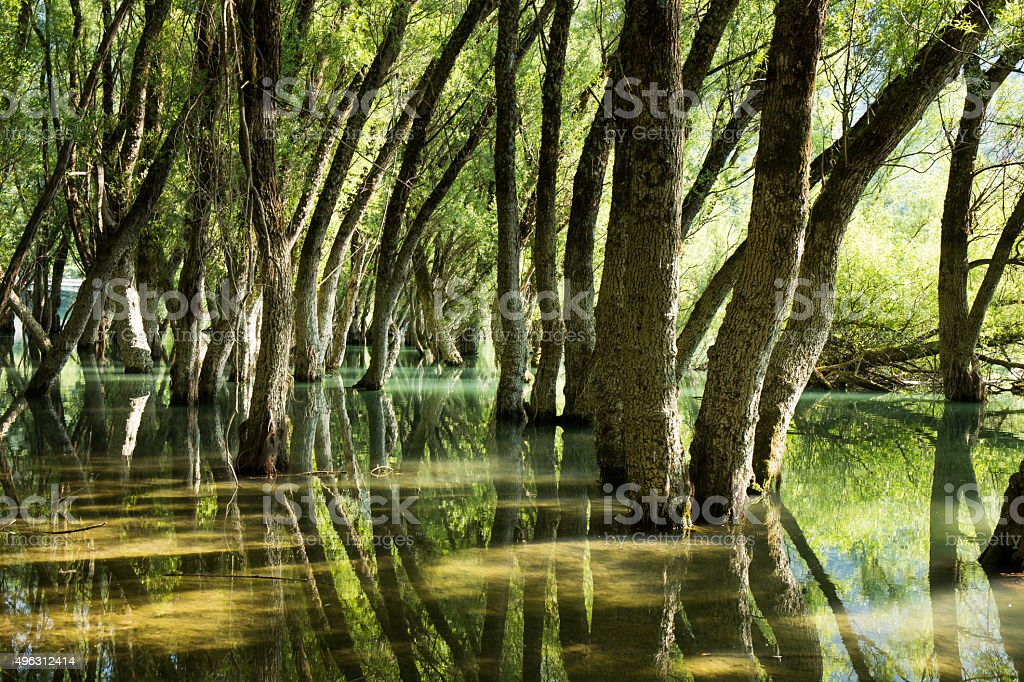 Oak forest reflected in the clear waters of a lake stock photo