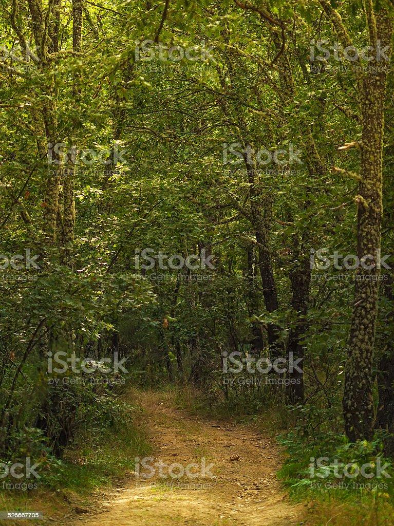 oak forest road foto royalty-free