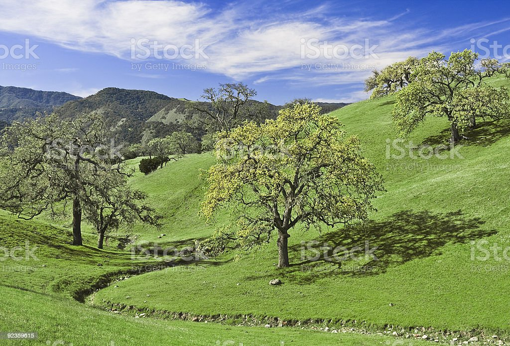 Oak Glade royalty-free stock photo