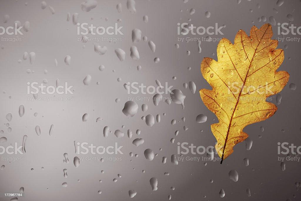 Oak Leaf And Raindrops royalty-free stock photo
