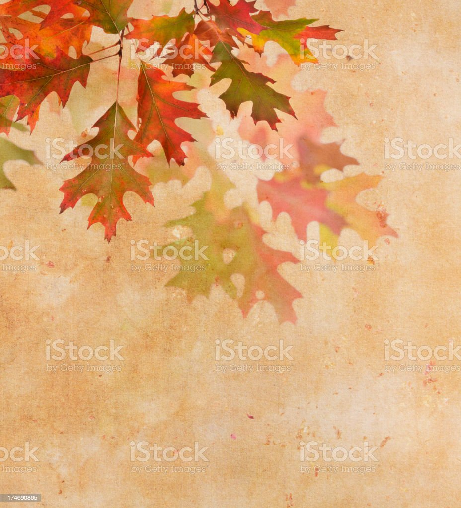 Oak Leaf Border royalty-free stock photo