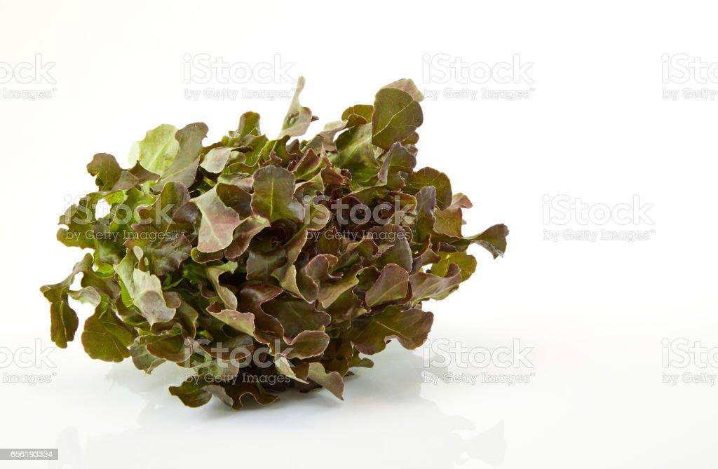 Oak Leaf lettuce stock photo