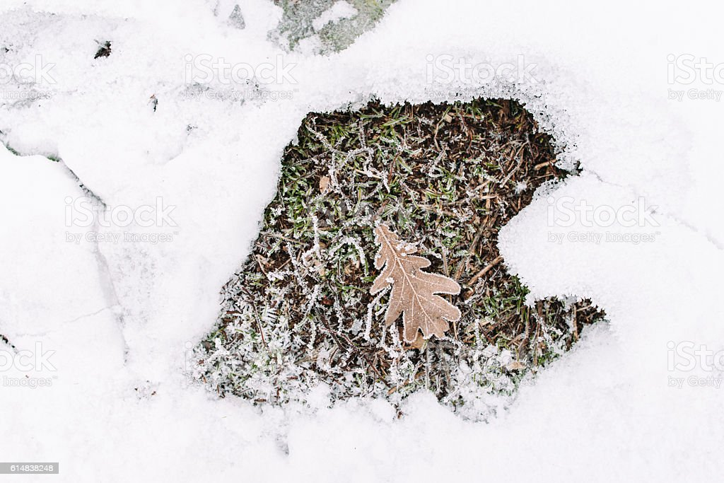 Oak leaf on grass in snow frame, flat lay stock photo