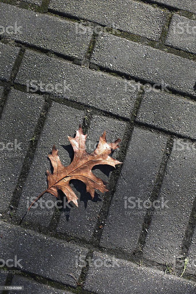 Oak Leaf on Sidewalk in Vancouver, British Columbia, Canada stock photo