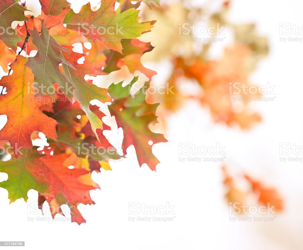 Oak Leaves Abstract royalty-free stock photo
