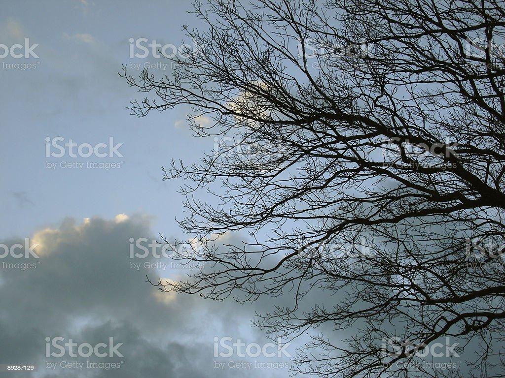 oak royalty-free stock photo