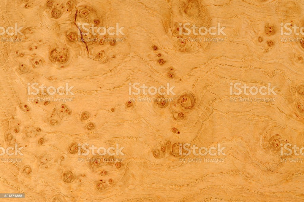 Oak Root Texture stock photo