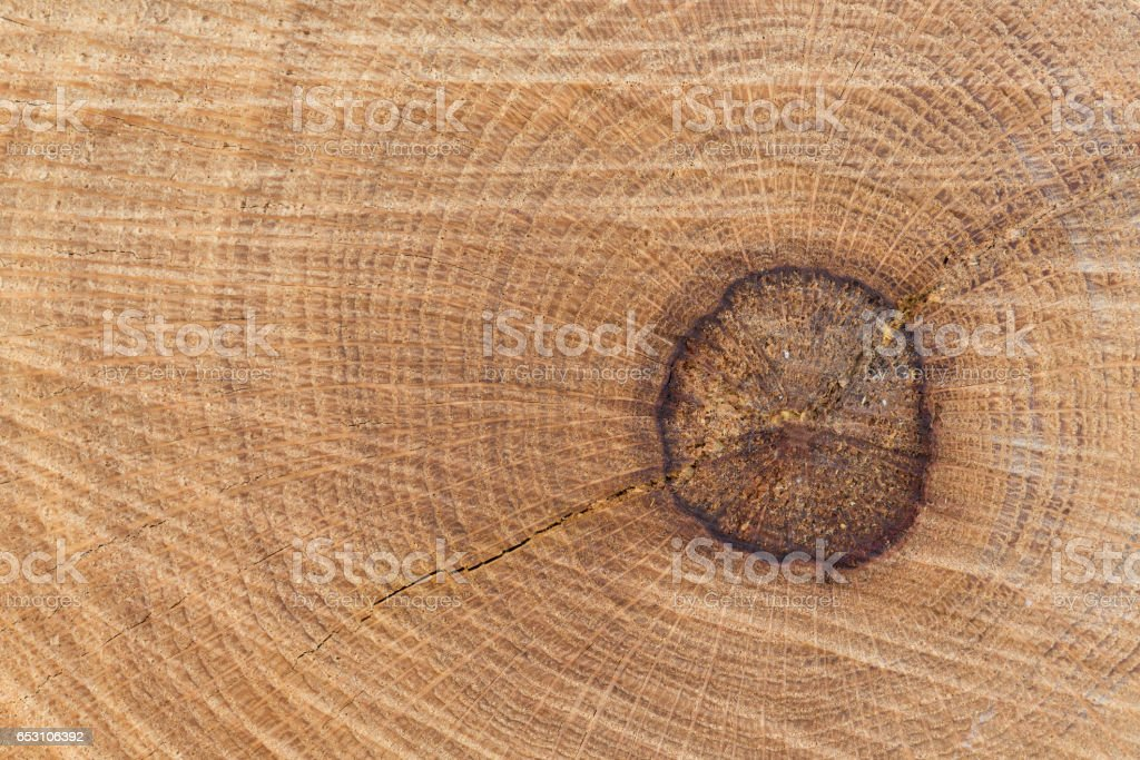 Oak split  growth rings stock photo