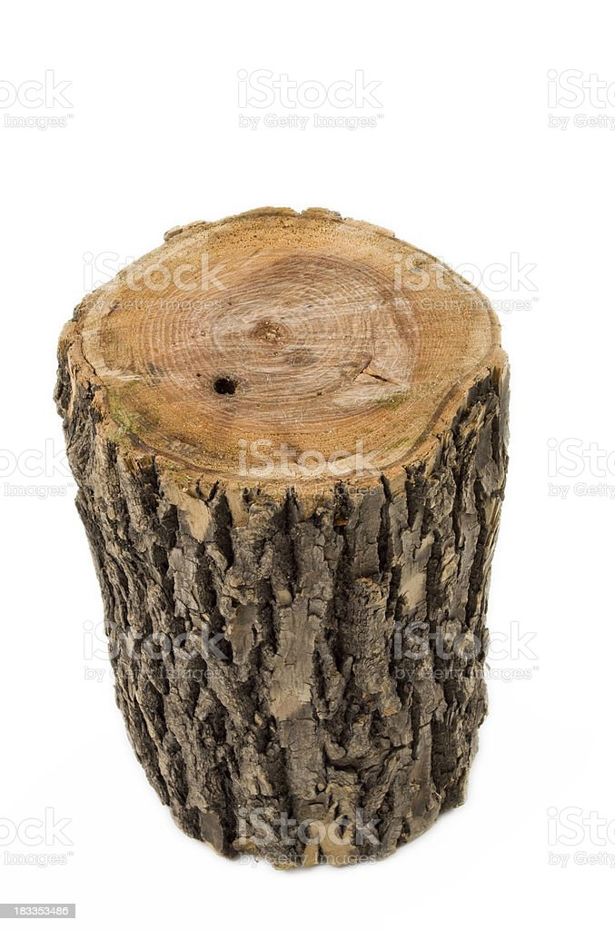 Oak stump stock photo