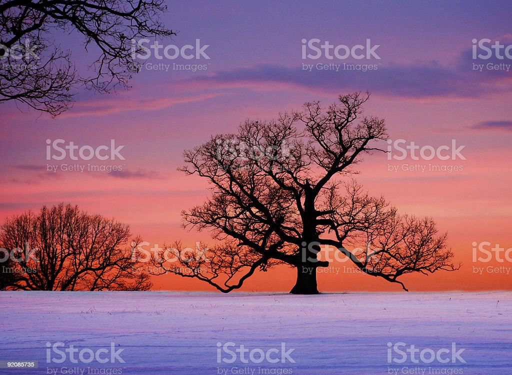 Oak tree against winter sunset royalty-free stock photo