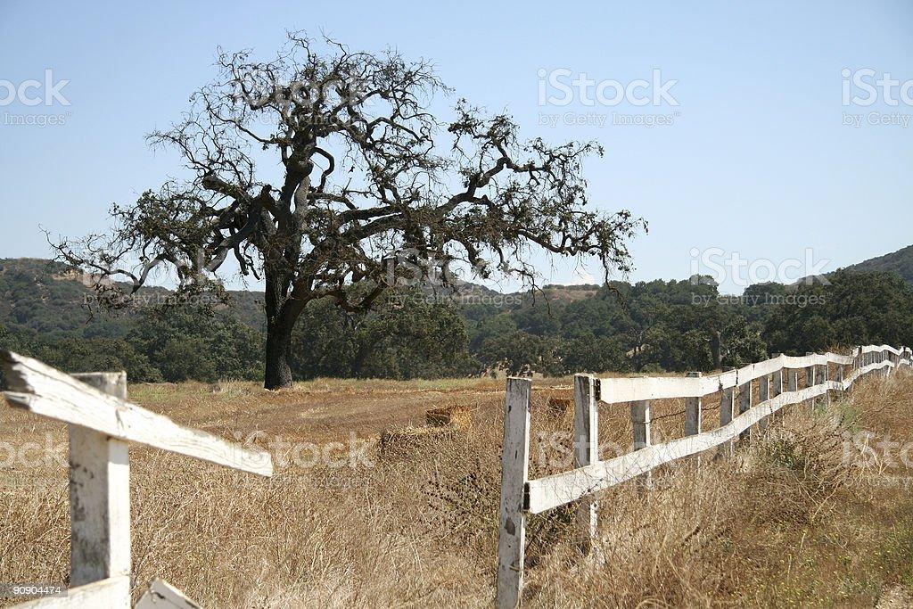 Oak tree y valla foto de stock libre de derechos