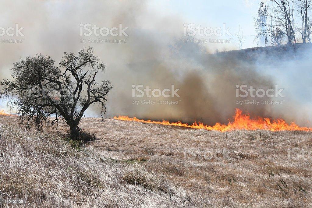 Oak tree y fuego foto de stock libre de derechos