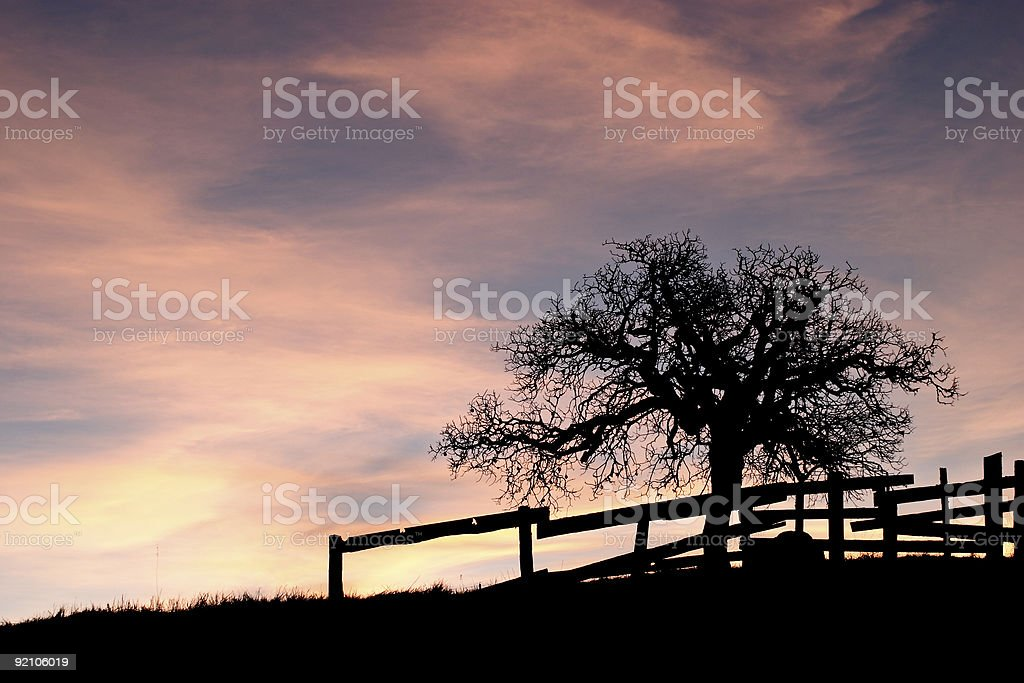 Oak tree and old fence at sunset royalty-free stock photo