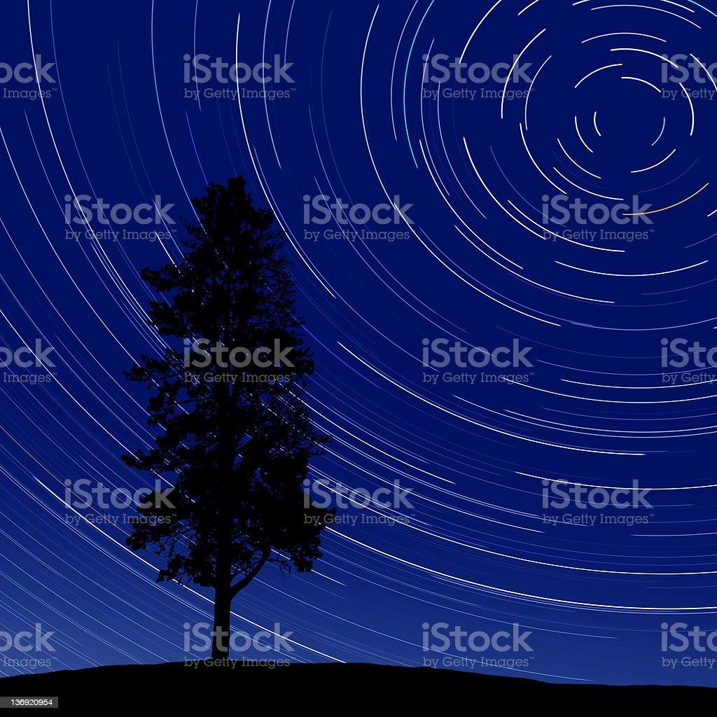 oak tree at night with stars stock photo