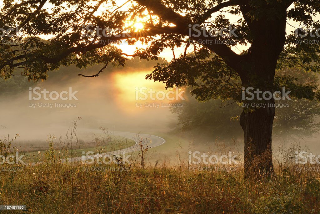Oak Tree at Sunrise stock photo