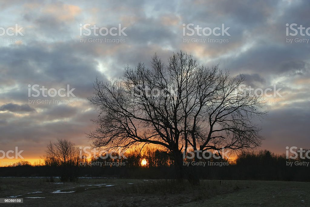 Oak tree at sunset royalty-free stock photo