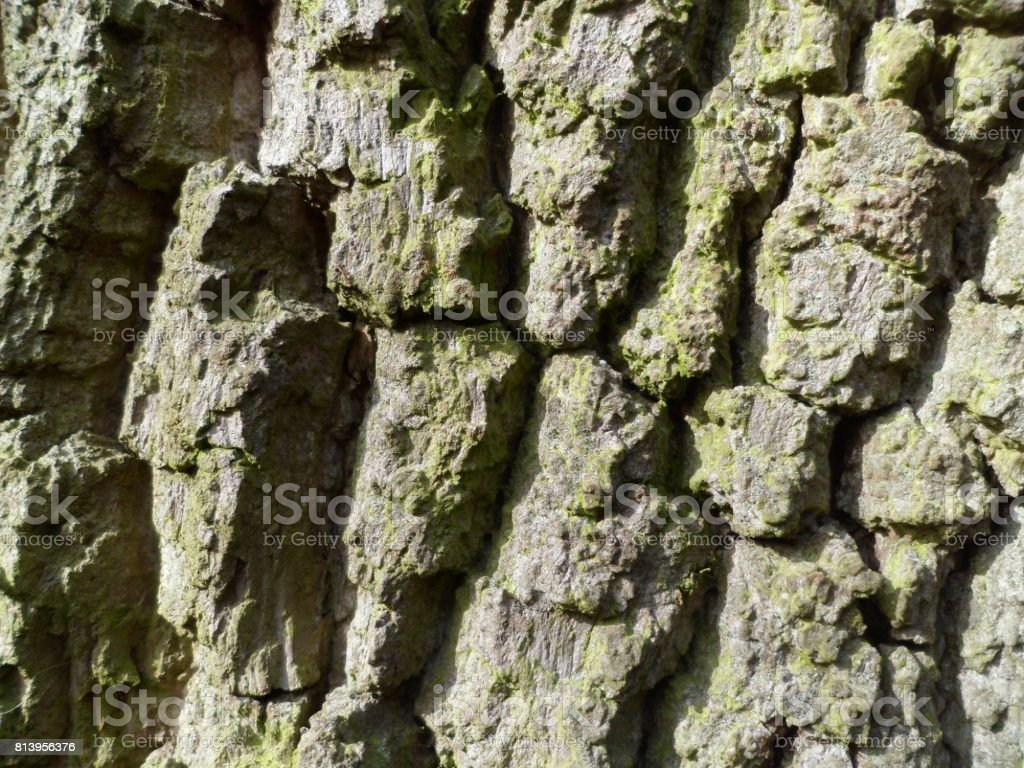 Oak Tree Bark Textures stock photo