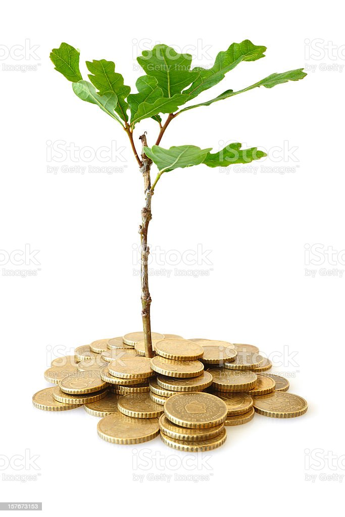 Oak Tree Growing out of Money, Isolated on White royalty-free stock photo