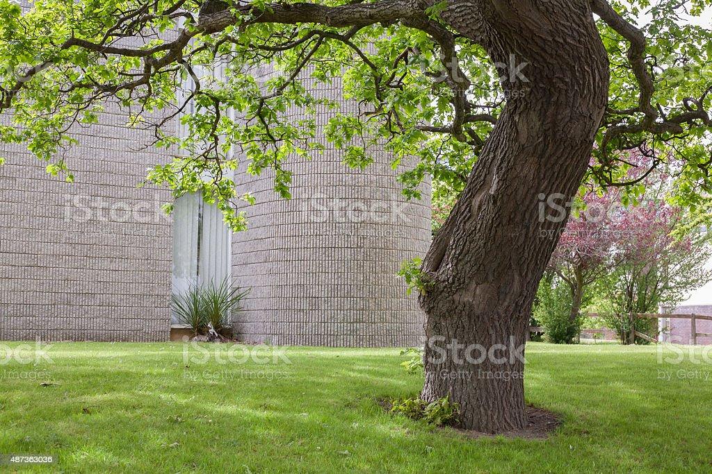 Oak tree near office building in Sandyford stock photo