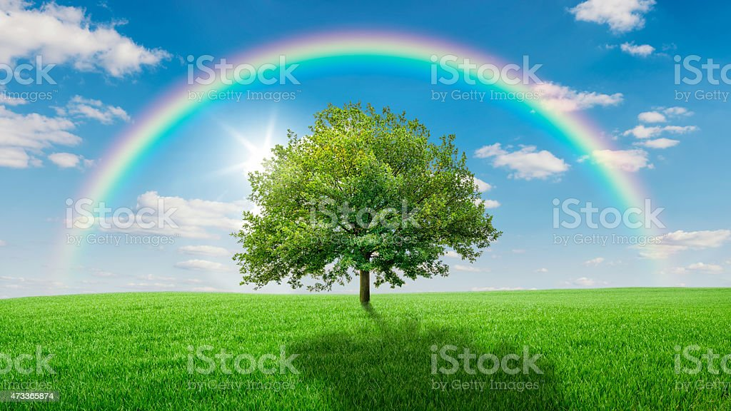 Oak tree on a green meadow covered by a rainbow stock photo