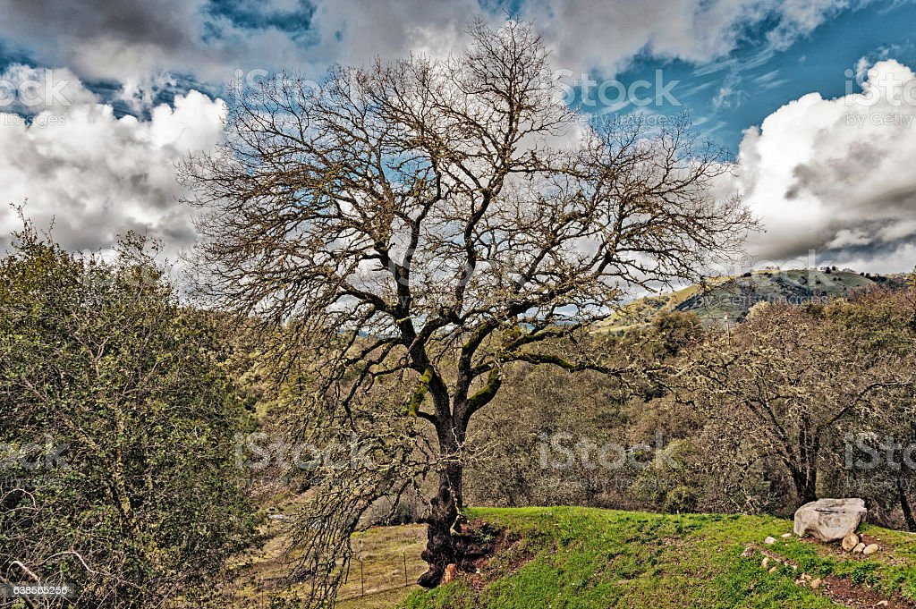 Oak Tree on Ridge in the Gold Country under Clouds stock photo
