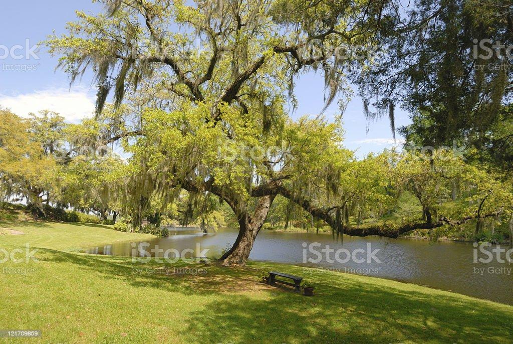 Oak tree on southern plantation stock photo