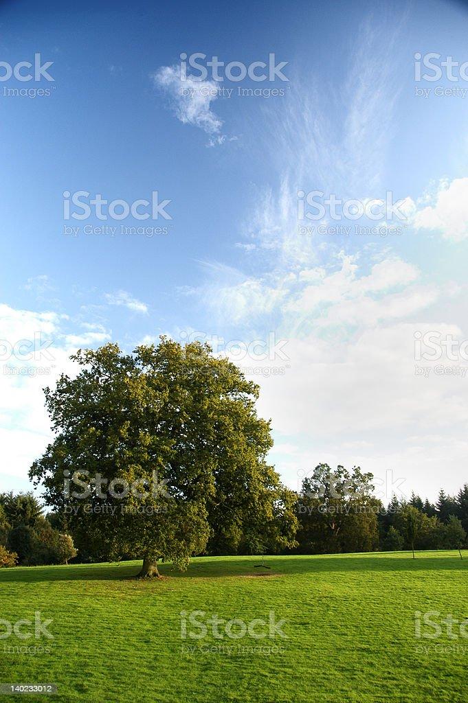 Oak Tree royalty-free stock photo
