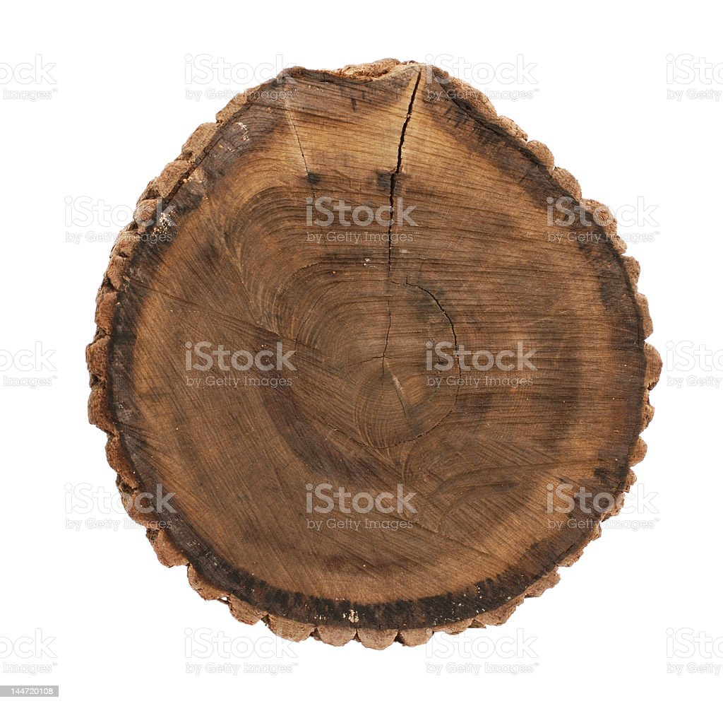 Oak tree stump with several visible rings stock photo