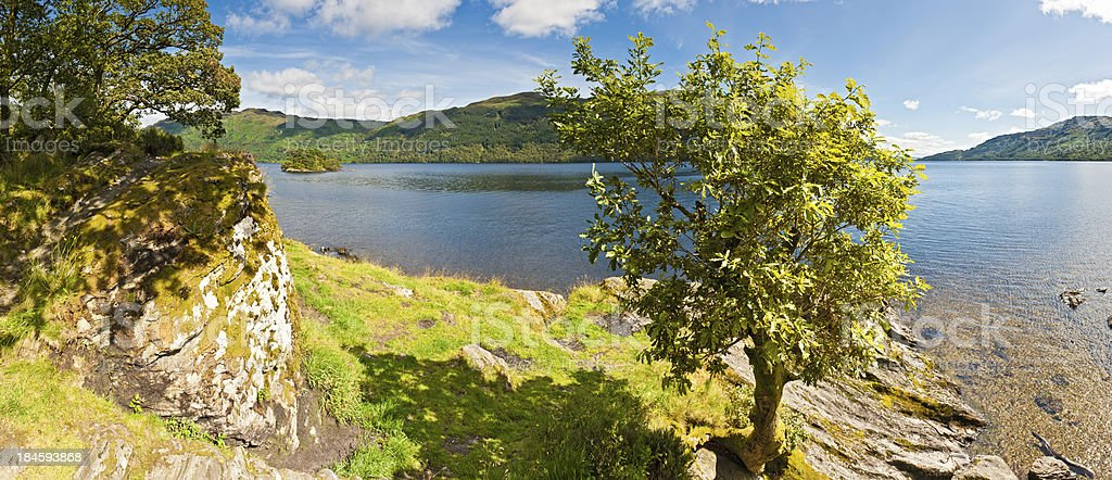 Oak tree summer shore Loch Lomond panorama Scotland royalty-free stock photo