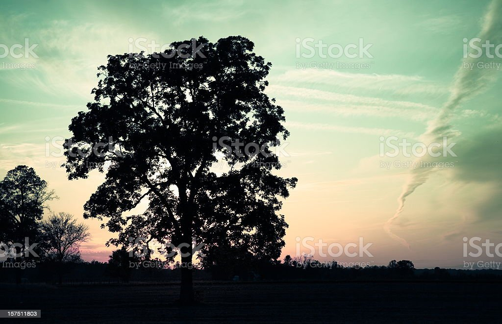 Oak Tree Sunset royalty-free stock photo