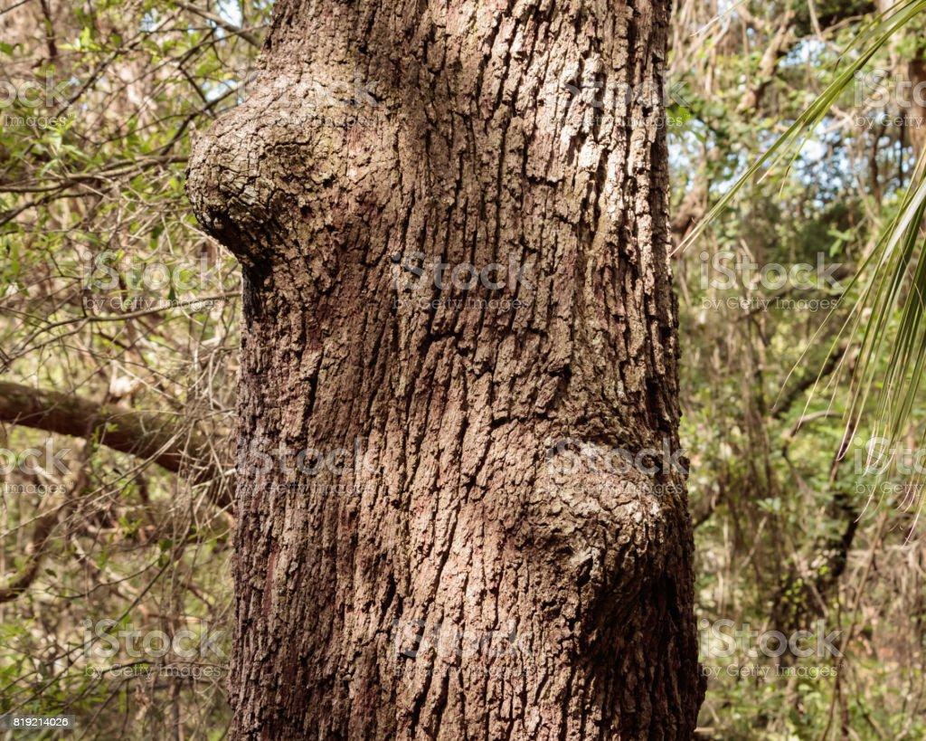 Oak tree trunk close up bumps stock photo
