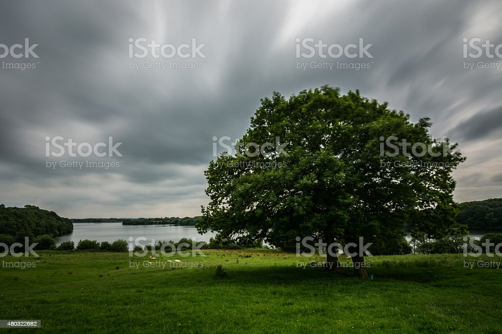Oak Tree With Long Lake In Background. stock photo
