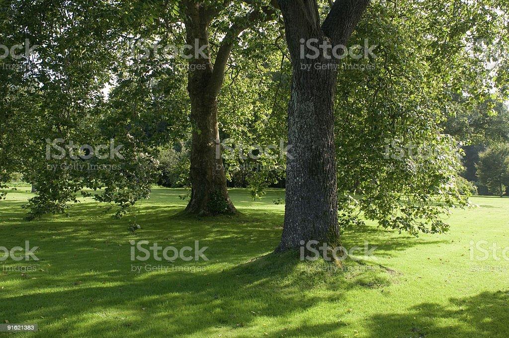 Oak trees, cornwall royalty-free stock photo