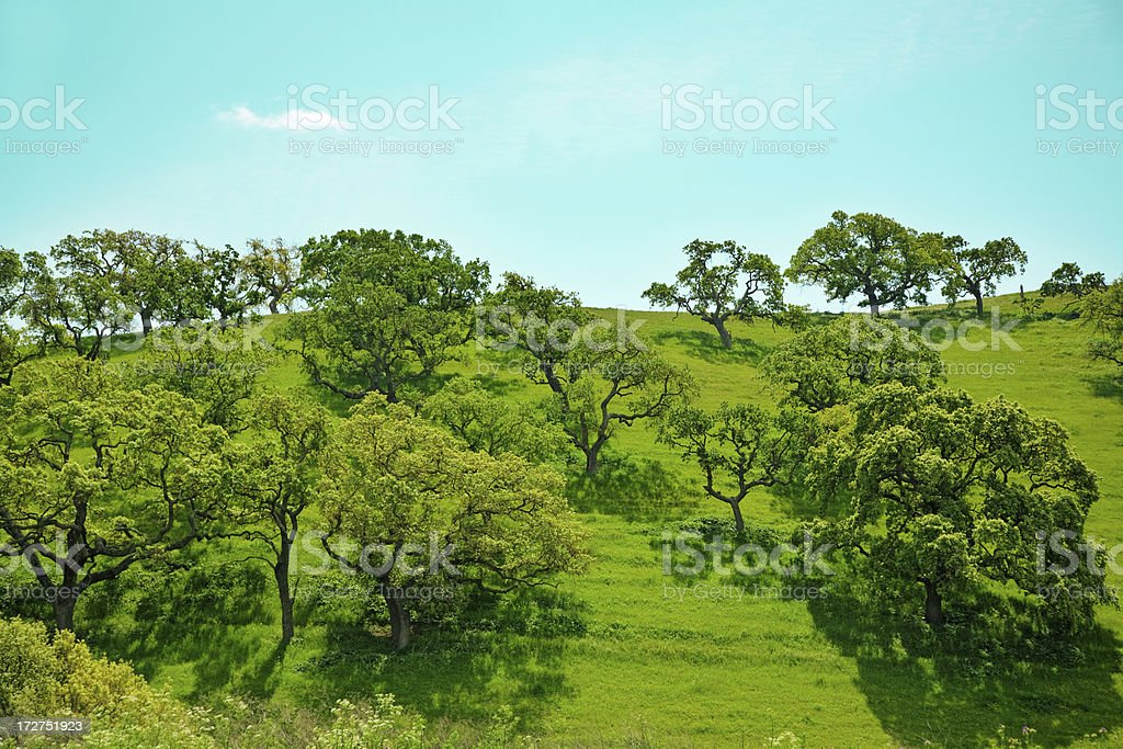 Oak Trees Dotted Hills royalty-free stock photo