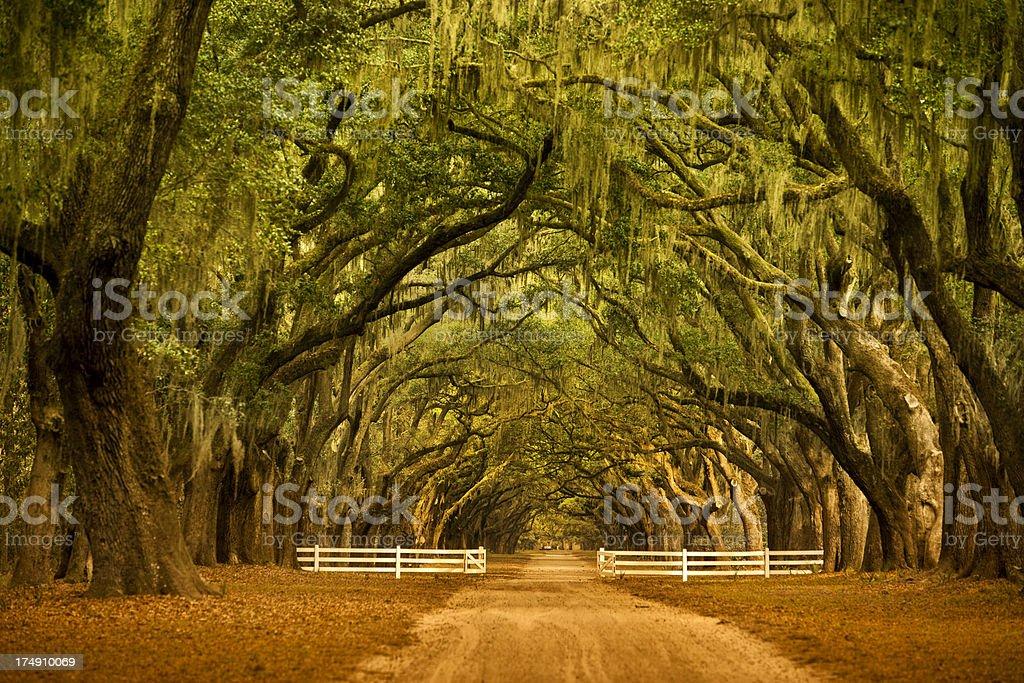 Oak trees in Savannah Georgia stock photo