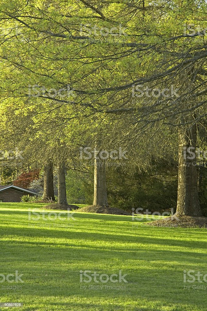 Oak Trees & Lawn, Spring royalty-free stock photo