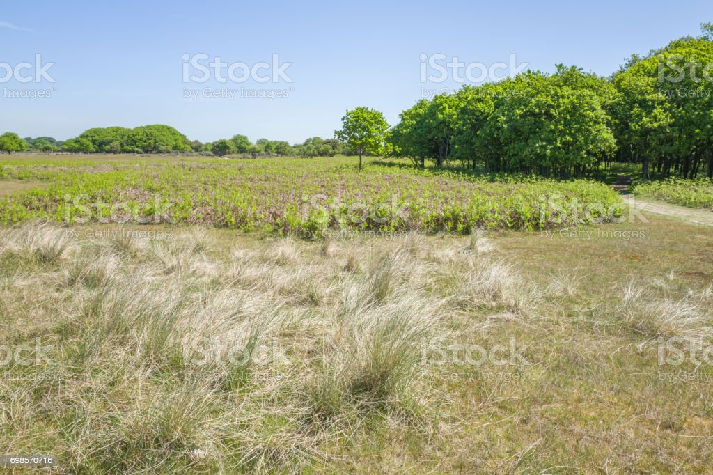 Oak trees with ferns. stock photo