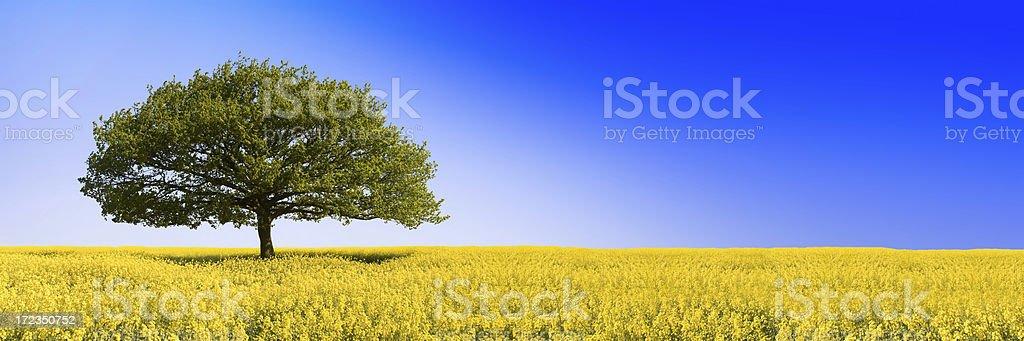 Oaken Blue (XLarge) royalty-free stock photo
