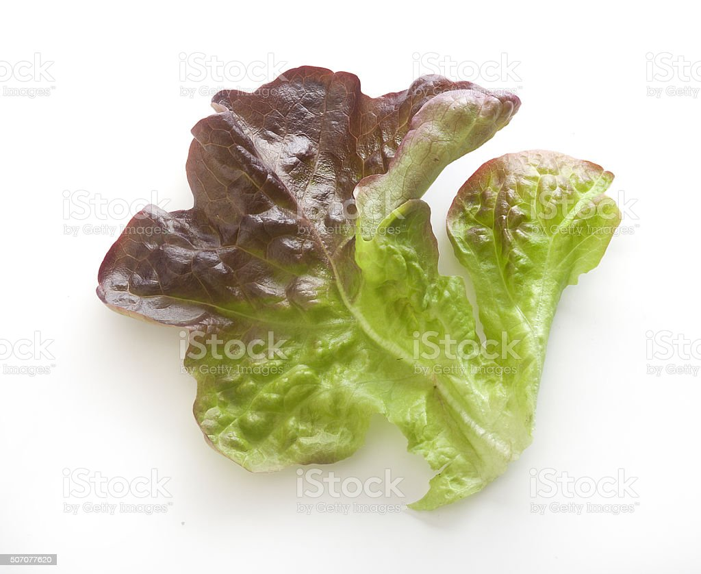 Oakleaf lettuce stock photo