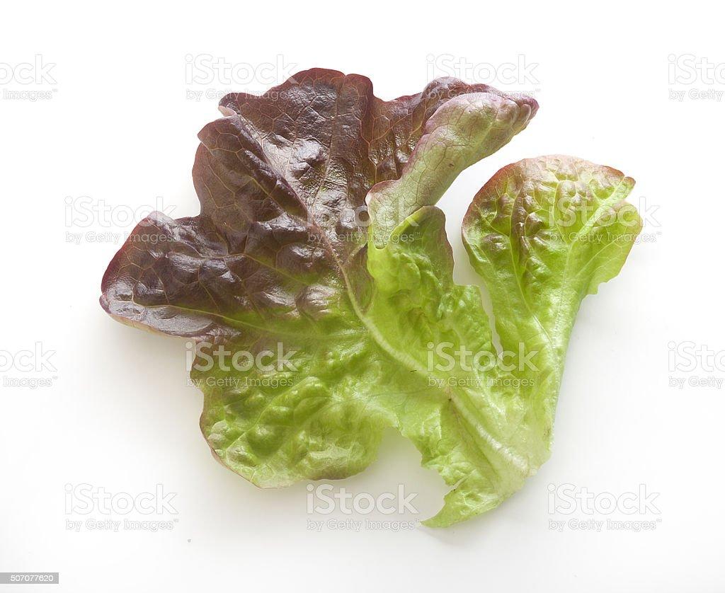 Oakleaf lettuce stock photo