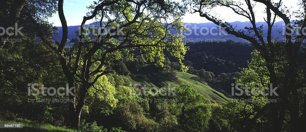 Oaks and Hills, panorama, Northern California, Spring royalty-free stock photo