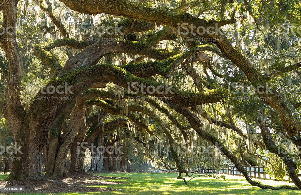 Oaks Avenue Charleston SC stock photo