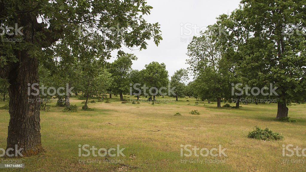 Oaks Mount - Monte de Robles stock photo