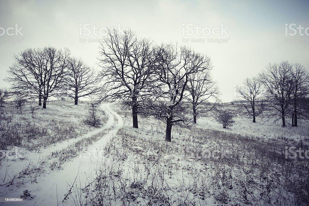 oaks royalty-free stock photo
