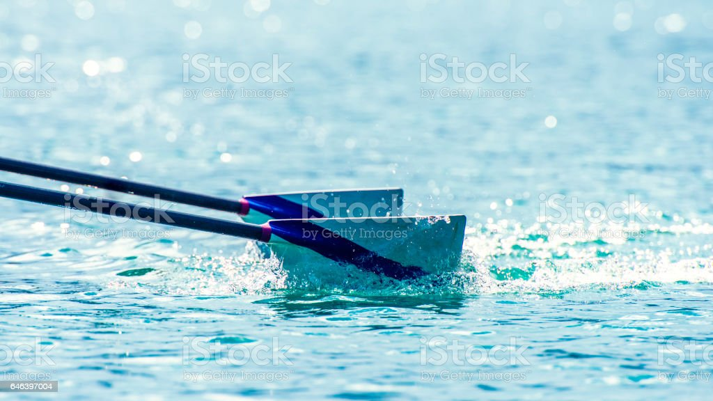 Oars in river stock photo