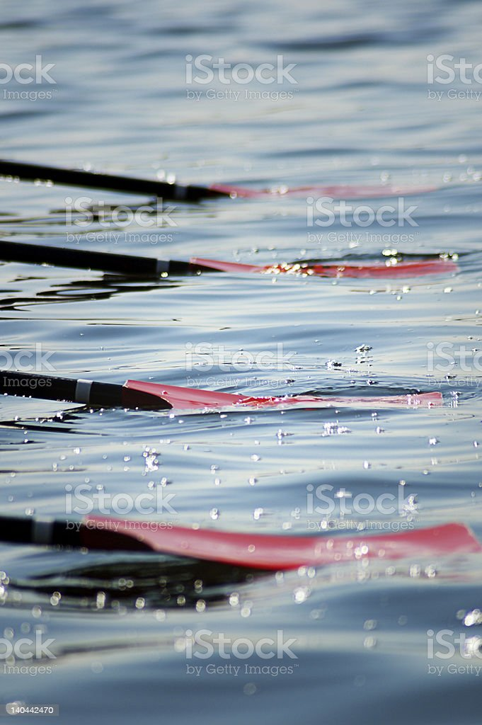Oars in the Water royalty-free stock photo